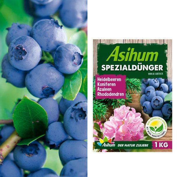 2 x Profi-Heidelbeeren 'Duke®' + 1 kg Asihum Spezialdünger