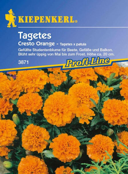 Tagetes 'Cresto Orange'