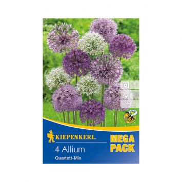 Zierlauch Allium Mix - Mega Pack