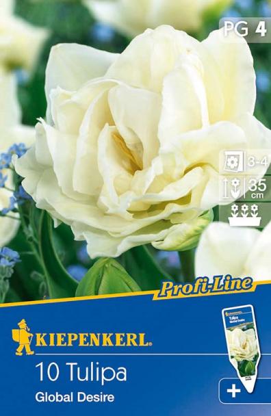 Gefüllte frühe Tulpe `Global Desire` - Blumenzwiebel