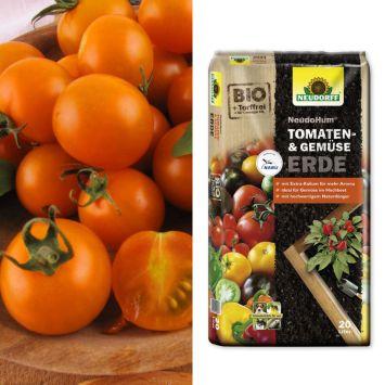 Veredelte Mini-Cherry-Tomate 'CherryGold' F1 + NeudoHum® Tomaten- und Gemüseerde (Sparangebot)