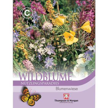 Wildblume Blumenwiese