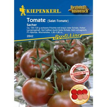 Tomaten 'Sacher' Schokoladentomate - F1-Hybride