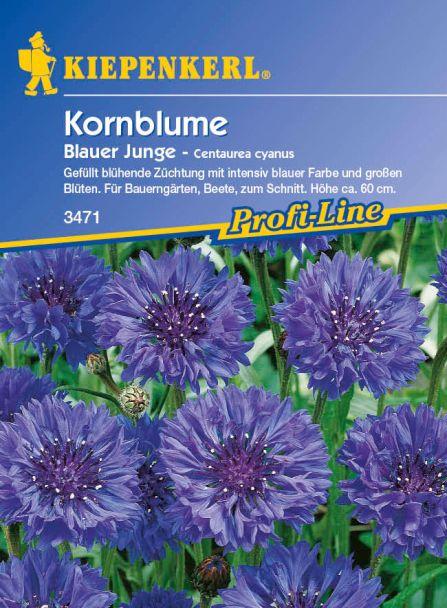 Kornblume 'Blauer Junge'