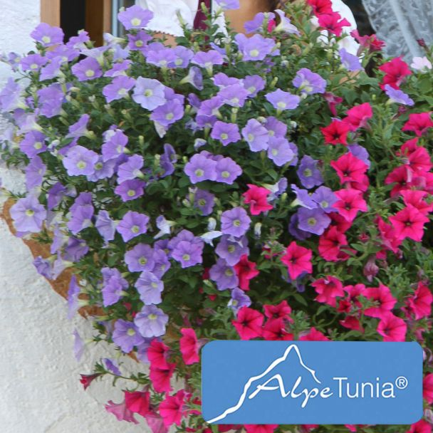 AlpeTunia® Light Blue
