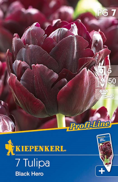 Tulpe `Black Hero` - Blumenzwiebel