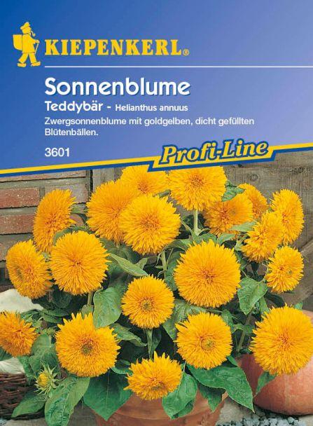 Sonnenblume 'Teddybär'