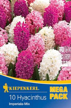 Hyazinthen 'Imperiala Mix Rosa/Weiß'