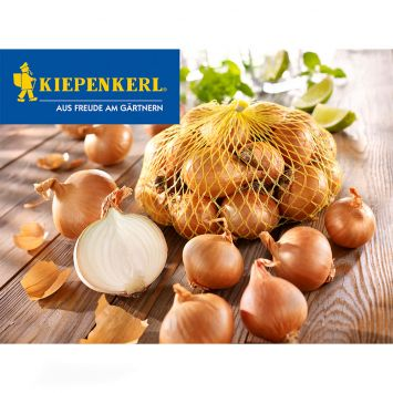 Steckzwiebel Gelbe Schalotten 'Golden Gourmet',  500 g (100 g/€ 0,60)