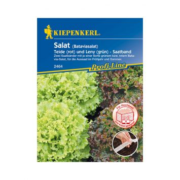 Salat (Batavia-Salat) 'Teide und Leny' (Saatband)
