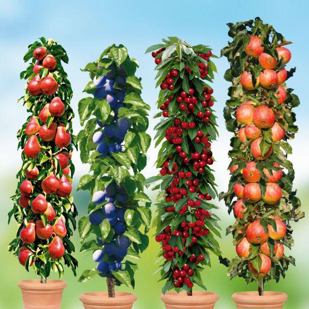 4 Säulen-Bäume: Rubina, Fruca, Decora, Starcats®