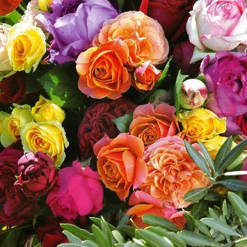 4 x bunte 'Parfum-Rosen'