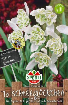 Schneeglöckchen Flore Pleno