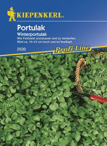 Portulak 'Winterportulak'