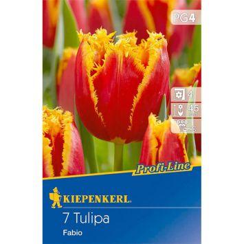 Gefranste Tulpen `Fabio` - Blumenzwiebel