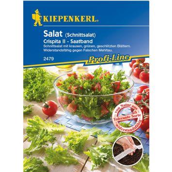Salat 'Crispita II' (Saatband)