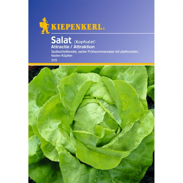 Kopfsalat 'Attractie'