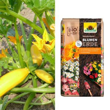 Sparangebot: 2 x Culinaro-Gold F1 + 1 x NeudoHum® Tomaten- und Gemüseerde, 20 Liter