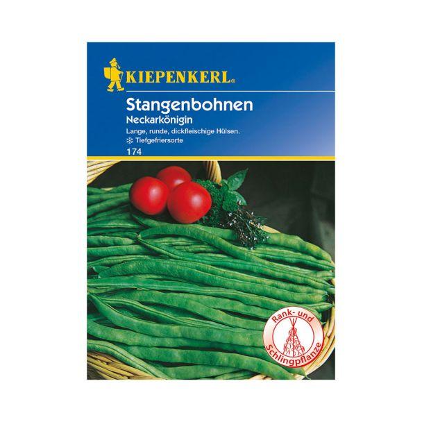 Stangenbohnen 'Neckarkönigin'
