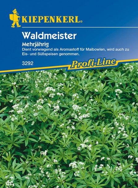 Waldmeister 'Mehrjährig'