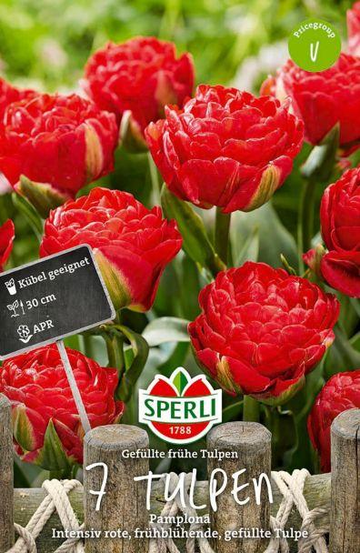 Tulpe Pamplona