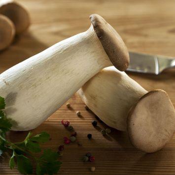 'Kräuterseitling' Pilz-Fertigkultur