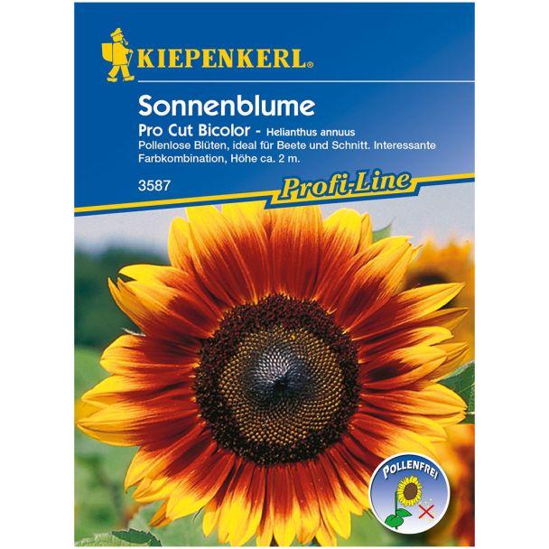 Sonnenblume 'Pro Cut Bicolor'