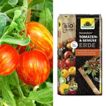 Busch-Tomaten 'Lucky Queen' + Erde (Sparangebot)