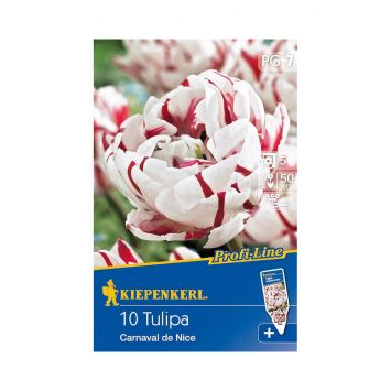 Gefüllte Tulpe `Carnaval de Nice` - Blumenzwiebel