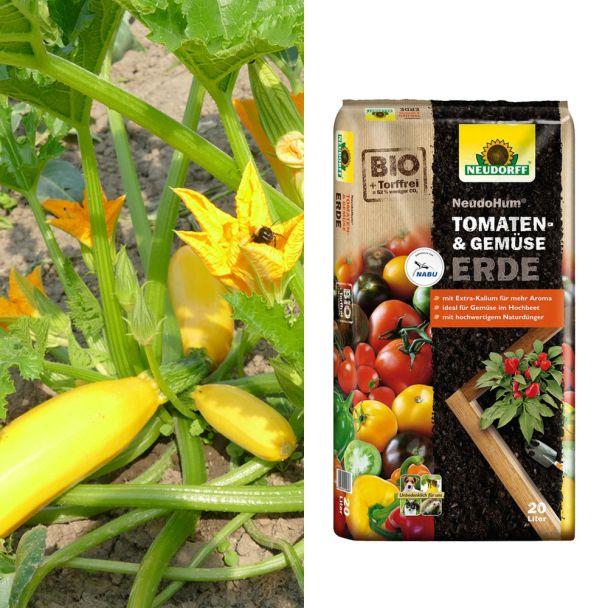 Culinaro-Gold F1 + NeudoHum® Tomaten- und Gemüseerde (Sparangebot)