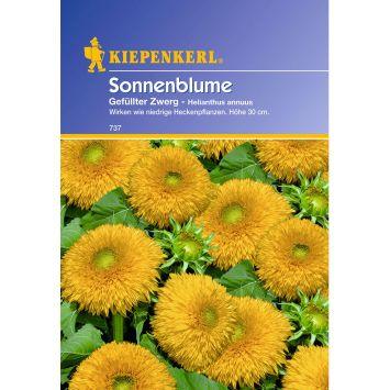 Sonnenblume 'Gefüllter Zwerg'