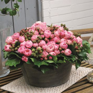 'Playful Rokoko®' Rose