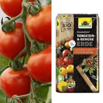 Sparangebot: 2 x 'Harzfeuer' F1- Freiland-Tomate + 1 x NeudoHum® Tomaten- und Gemüseerde, 20 Liter