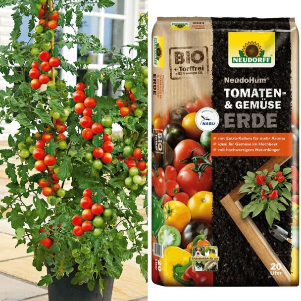 Tomate Tomaccio + Erde (Sparangebot)