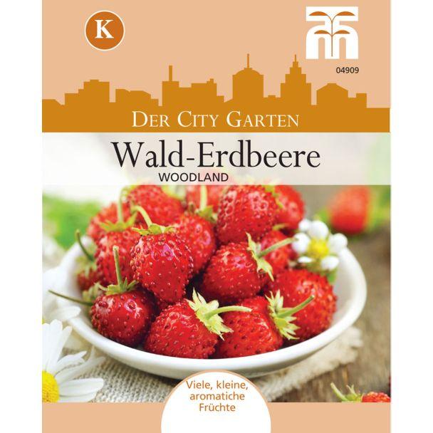Wald-Erdbeere Woodland