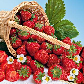 Erdbeere Mara des Bois®