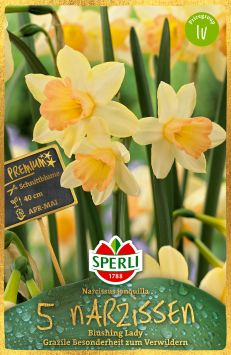 Sperli Premium Narcisssus Blushing Lady
