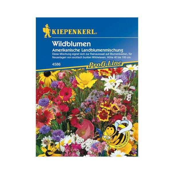 Wildblumen 'Amerikanische Landblumenmischung'