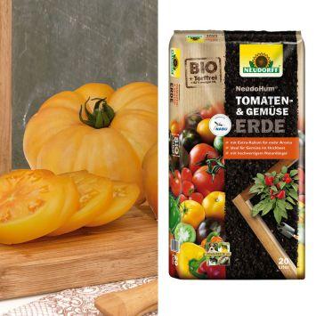 Fleischtomate Golden Ananas + NeudoHum® Tomaten- und Gemüseerde (Sparangebot)