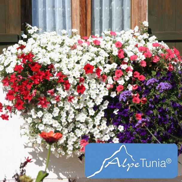 AlpeTunia® White