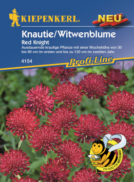 Knautie/Witwenblume Red Knight