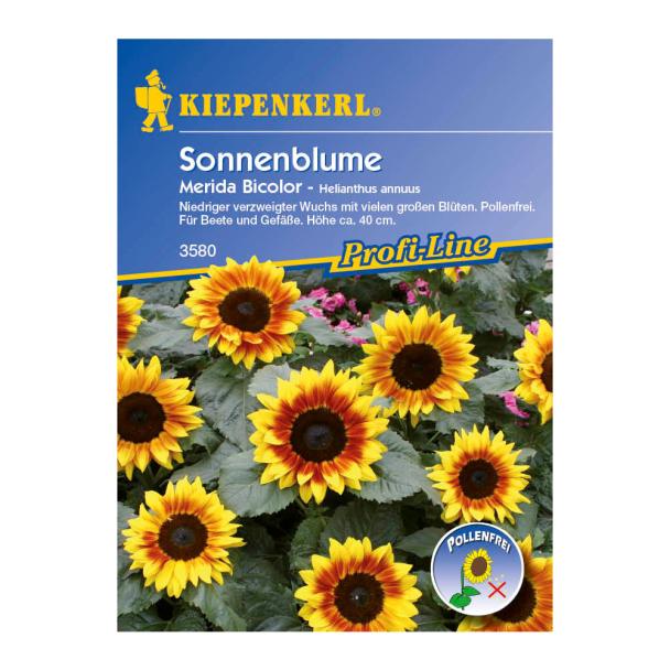 Sonnenblume 'Merida Bicolor'