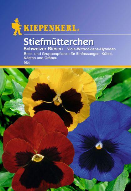 Stiefmütterchen 'Schweizer Riesen'