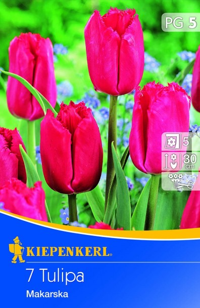 Tulpe Makarska