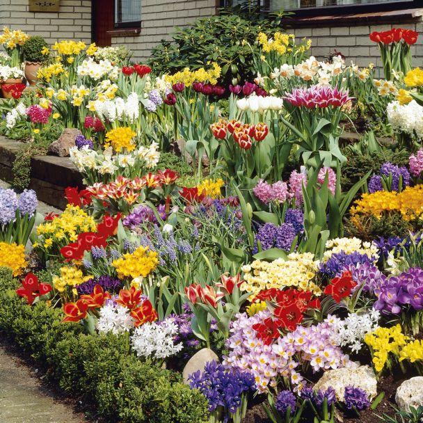 250 Blumenzwiebeln