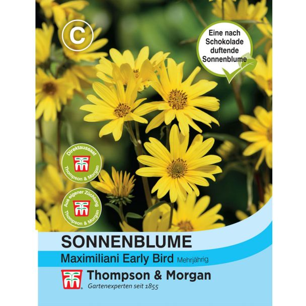 Sonnenblume maxi Early Bird