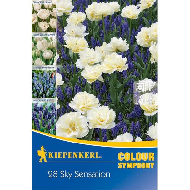 Colour Symphony Sky Sensation