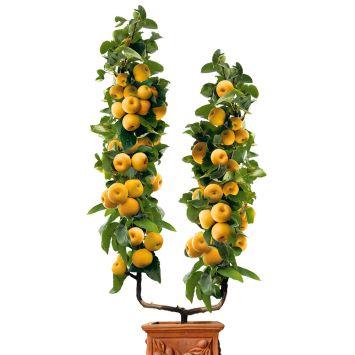 U-Form-Champagner-Birnen-Apfel Prosecco