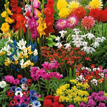 Sommer-Prunkgarten 75 Blumenzwiebeln