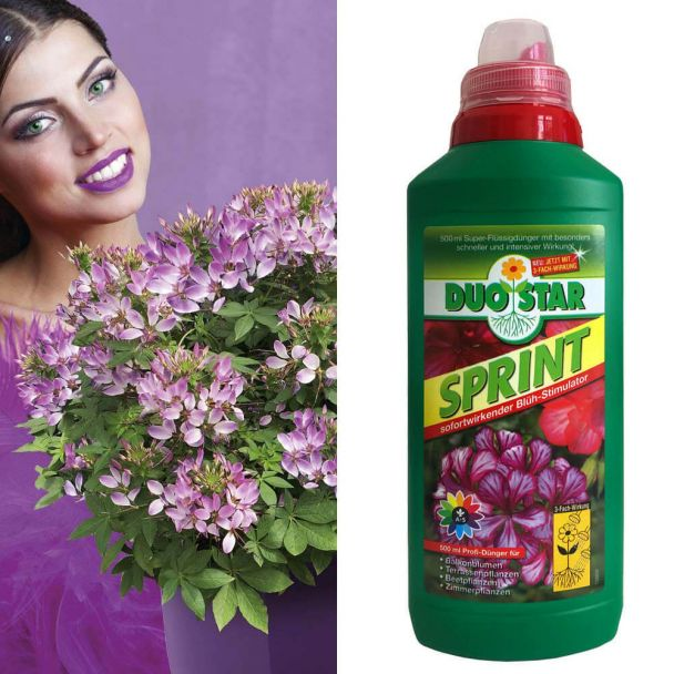 3 x 'Rosalita®' + 1 x 0,5 l DuoStar Sprint im Sparpaket